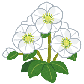 flower_christmas_rose.png